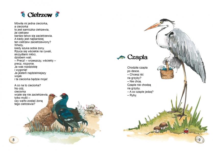 Książki Dla Dzieci O Ptakach I Inne Materiały Dla Małych